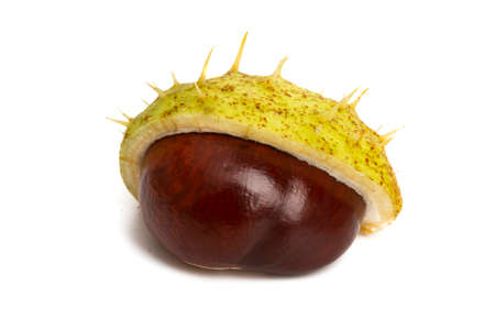 chestnut isolated on white background