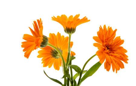 marigold flower isolated on white background Stock Photo