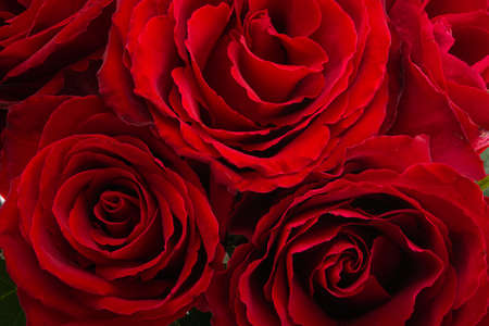 festive background of roses close up Zdjęcie Seryjne