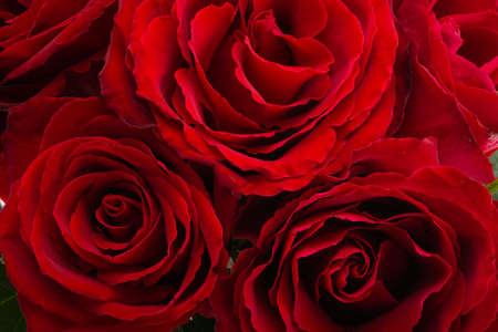 festive background of roses close up Reklamní fotografie