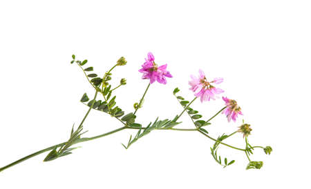 meadow flowers isolated on white background.