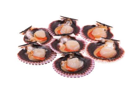 scallops in shells isolated on white background Zdjęcie Seryjne