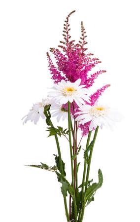 Astilba bouquet isolated on white background.