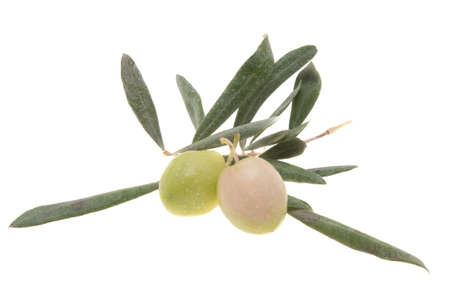 olives on a branch isolated on white background