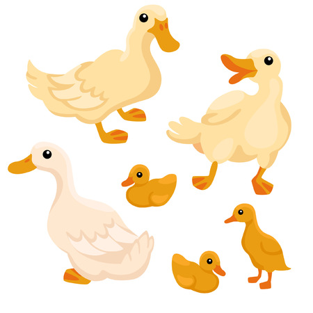 ducklings: Tree white adult ducks with tree ducklings on the white background
