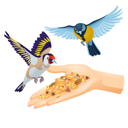 goldfinch: Woman feeding birds from her hand on white background Illustration