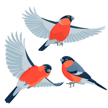 There are one sitting bullfinch and two flying bullfinches in cartoon style