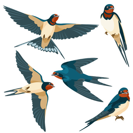 swallows: There are two sitting swallows and three flying swallows in cartoon style