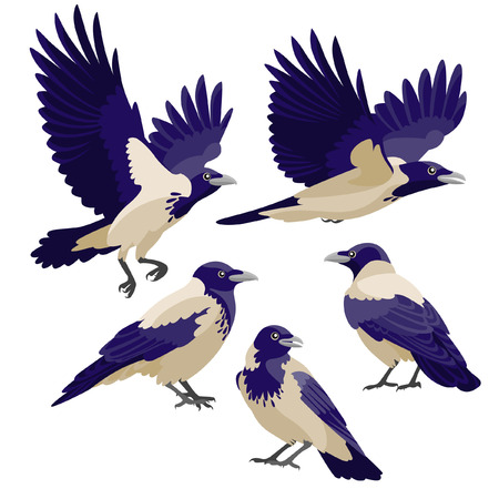 crows: There are three sitting crows and two flying crows in cartoon style Illustration