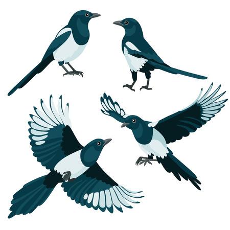 Er zijn twee zitten eksters en twee vliegen eksters in cartoon-stijl Vector Illustratie