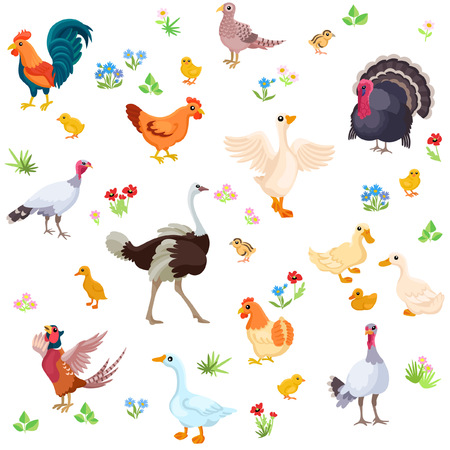 turkey hen: Rooster, turkey, ostrich, hen, geese and their ducklings in one seamless pattern