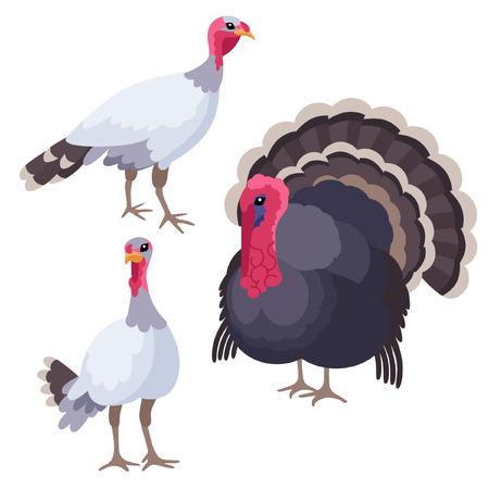 turkeys: There are three turkeys in cartoon style