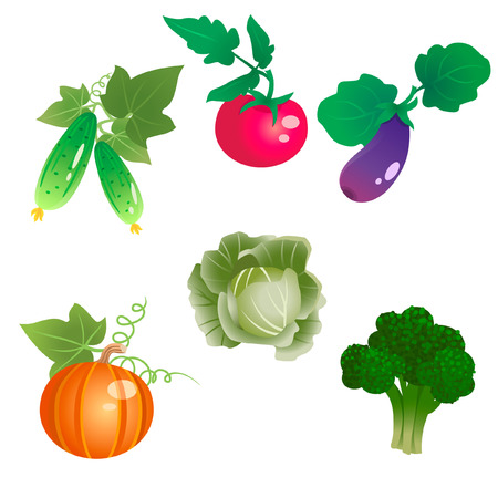 fruitage: Broccoli, cucumber, tomato, eggplant, pumpkin and cabbage are on white background