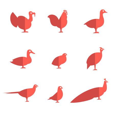 pigeon egg: Farm bird flat icons
