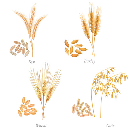 grain storage: Four cereals in form of grains and ears