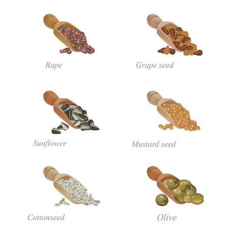 Six pelles avec différentes graines oléagineuses dans les Banque d'images - 67826161