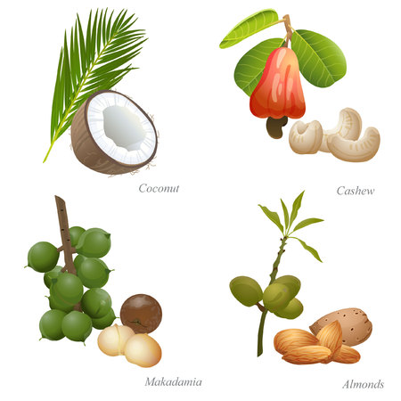 There are coconut, cashew, macadamia and almonds nuts with plant and peeled kernel