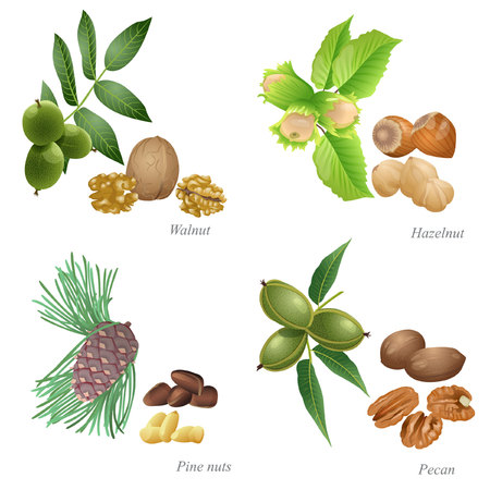 There are walnut, hazelnut, pine nuts and pecan nuts with plant and peeled kernel
