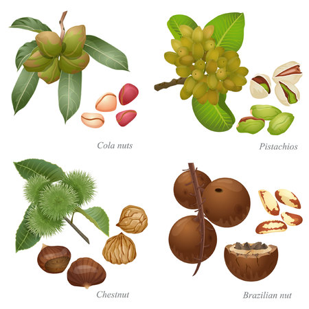 There are cola nuts, pistachios, chestnut and Brazilian nut