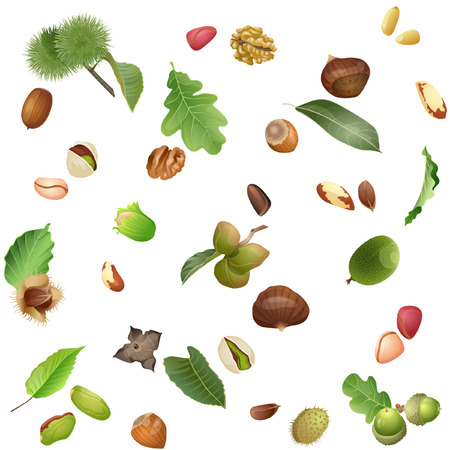Seamless pattern of summer plants with leaves and nuts