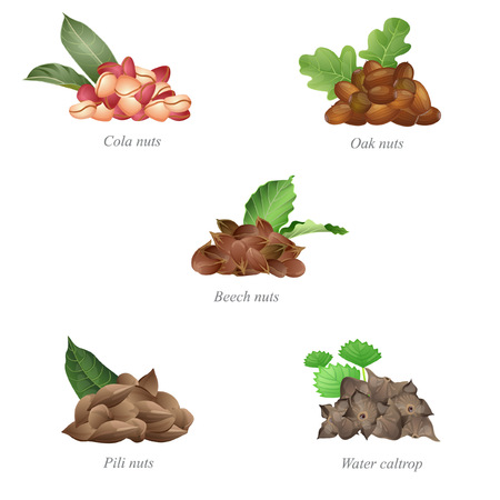 There are cola nuts, oak nuts, beech and pili nuts, and water caltrop in batches