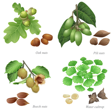 Nuts, nuts, beech nuts and water caltrop are plant and peeled kernels