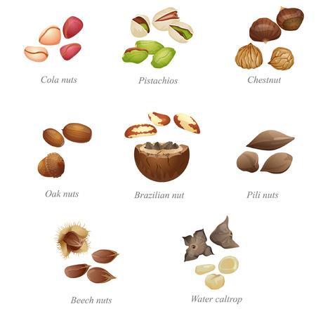 Il y a des noix de cola, pistaches, châtaignes, noix de chêne, noix brésilienne, pili, noix de hêtre et eau caltrop