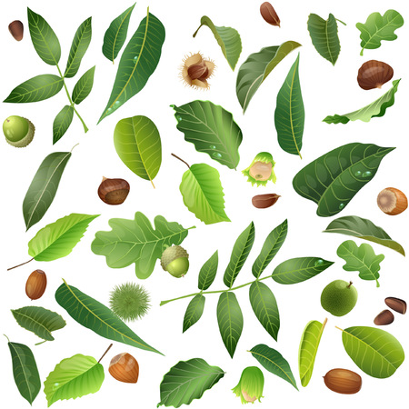 Seamless pattern of summer leaves and nuts
