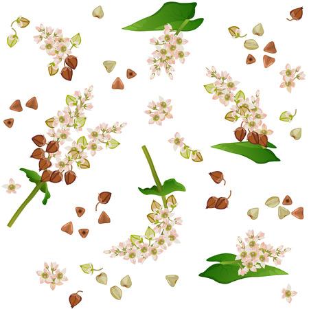 Naadloos patroon met boekweittakken, bloemen en korrels