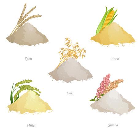 Batches van spelt, maïs, haver, gierst en quinoameel, oren en namen Stock Illustratie