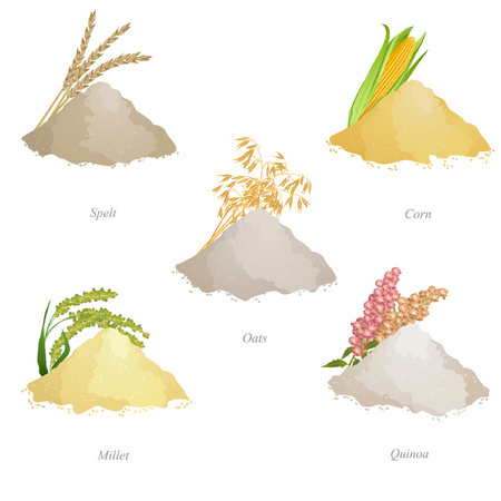 Batches of spelled, corn, oat, millet and quinoa flour, ears and names Illustration