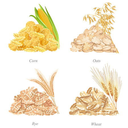 Batches of corn, oats, rye and wheat flakes, ears and names