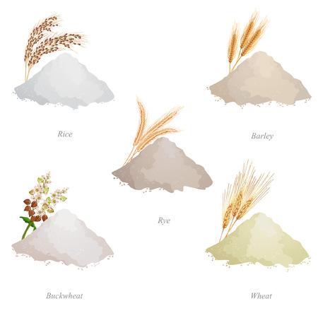 Orzo, segale, grano saraceno e farina di grano, orecchie e nomi