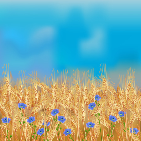 Wheat field with flax flowers and blue sky vector illustration. Illustration