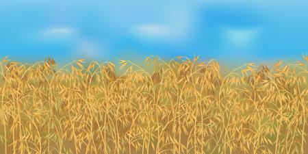 Horizontal field pattern with blue sky