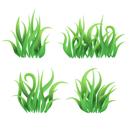 grass bushes Illustration