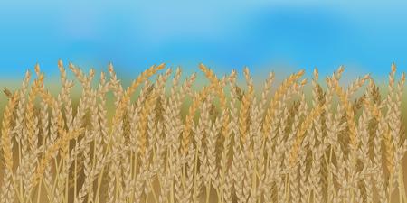 Horizontal field with blue sky