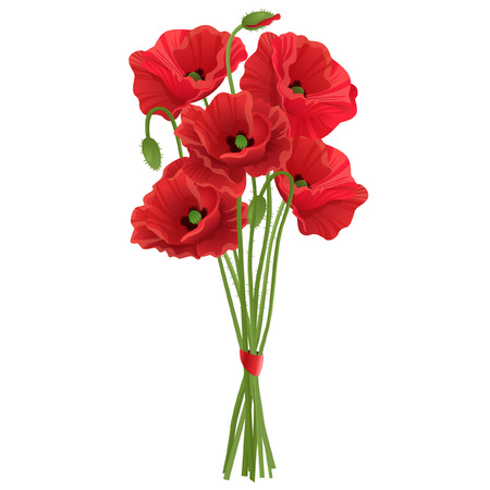 Isolated realistic bundle of poppies