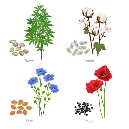 There are hemp, cotton, flax and poppy in the form of grains and plant