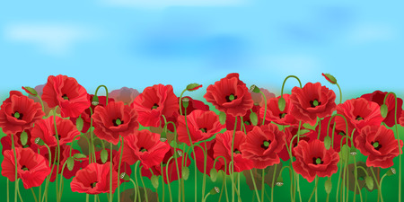 Horizontal poppy field with blue sky