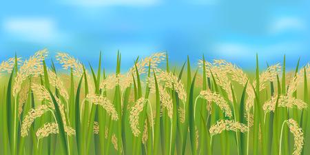 Horizontaal rijstveld met blauwe hemel Stock Illustratie