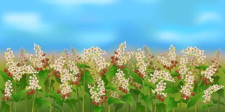 水平のそば畑と青い空