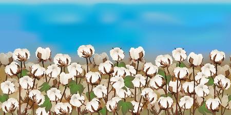 Horizontal cotton field with blue sky Ilustração
