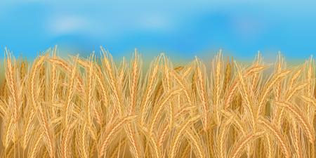 Realistic rye field in the harvesting time Ilustração