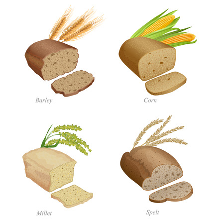 There are barley, corn, millet and spelled bread and ears Illustration