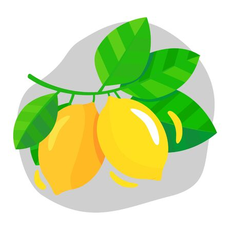 Yellow ripe lemon hanging on a branch with green leaves. Vector illustration on a white background with a gray shape