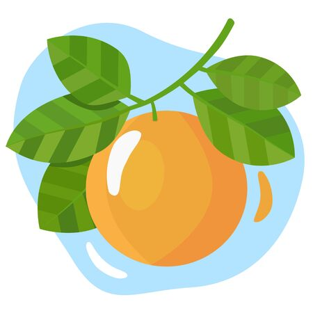 Ripe orange hanging on a branch with green leaves. Vector illustration on a white background with a blue shape