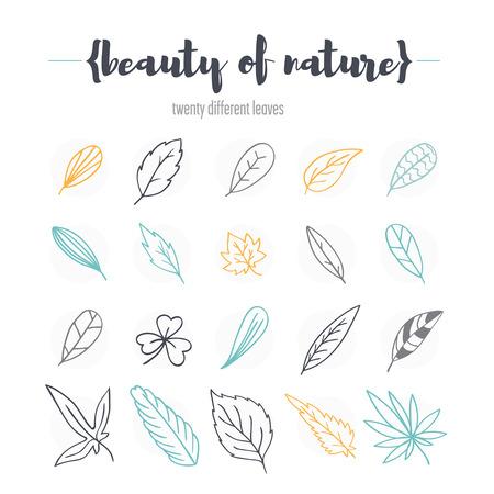 soumis: Ensemble de feuilles différentes. Il contient diverses feuilles d'érable, de trèfle, de bouleau et d'autres plantes. Soumis sous une forme stylisée.