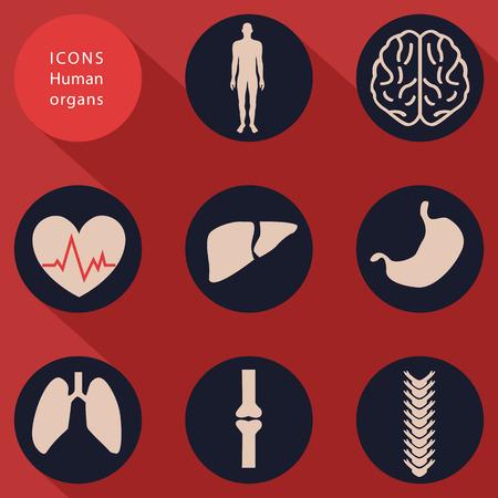 gyrus: Medical icons, human bodies, flat design
