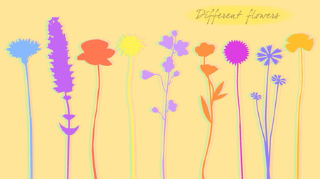 Silhouette of colored flowers, vector illustration
